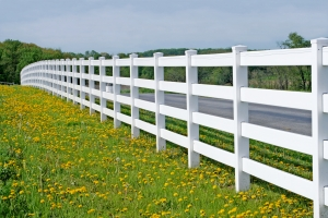 A vinyl white fence curves away in the distance with a field of blooming dandelions in the foreground.